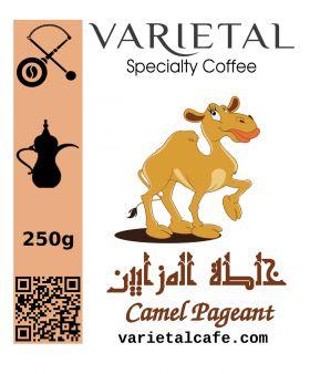 Camel Pageant Saudi Coffee